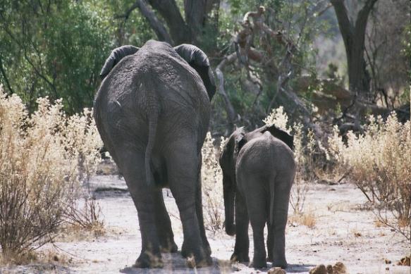 Mom & Calf, Botswana, Africa