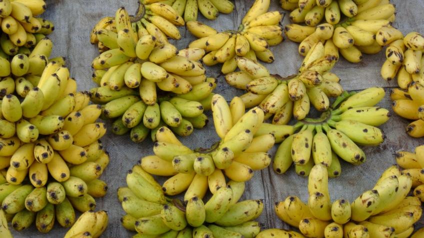 Bananas, Luang Prabang, Laos
